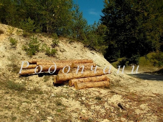 Родопски мохабети: На тясно... в гората