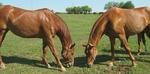 В Смолян Тодоровден ще бъде отбелязан с конни надбягвания и игри