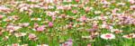 """С Ателие """"Еньовденски изцеления"""" в Киселчово започва програмата на Фестивала на дивите цветя"""
