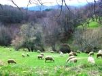 Родопски мохабети: Овчар води жена си на лекар