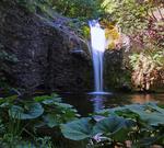 Непознатият водопад край село Долнослав: Лястовичи вир