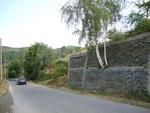 Уникалната бреза, която расте върху подпорна стена в Млечино, оцеля и тази година