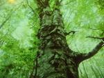 Границата край дървото с костите