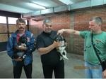 Раздадоха кучета на собственици на стада в Смолянско срещу нападения от мечки