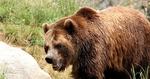 Тежката зима и снегът са довели до висока смъртност при дивите животни в Родопите