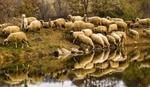 12-годишен получи нестандартно наказание от разгневен овчар