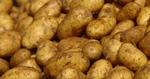Няма пазар за родопските картофи