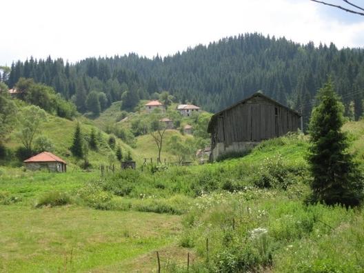 Борино е приятно и атрактивно място в Родопите, където могат да се видят различни видове диви животни. Има прекрасни места за излет и релакс сред природата. В близост се намира село Ягодина и Триград.