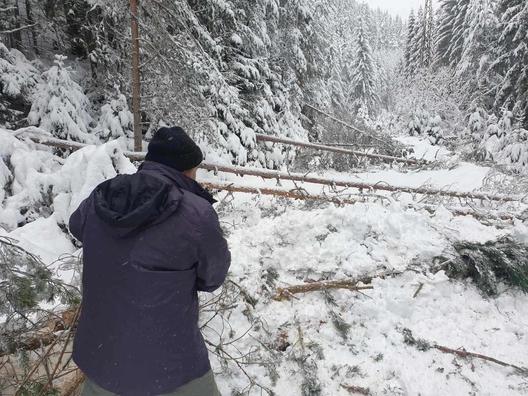 Снежно бедствие в Родопите (снимки)