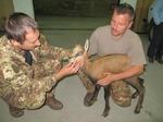 Чужденци ще отстрелват диви кози и муфлони в Девинско