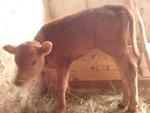 Драстично са намалели животновъдите и в маданското село Букова поляна