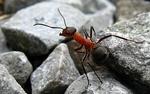 Бабини съвети: Как да се преборим с мравките вкъщи?