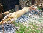 Златоград кани на празник на чевермето в началото на май