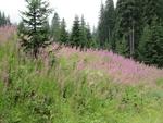 По проект обучават планински водачи как да представят родопските билки и цветя