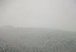 25 см сняг на Пампорово- слагането на вериги през Рожен и Пампорово е задължително