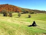 Есен край село Горна Арда