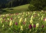 За пети пореден път Фестивалът на дивите цветя ще ни потопи в цветната магия на Родопите