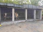 """""""Арестуваха"""" 5 крави, обикалящи из Кърджали"""