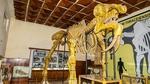 Палеонтологичен музей – Асеновград. На среща със съществата живяли преди милиони години.