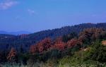 Загива гората в Родопа