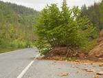 В Родопите и пътищата се раззеленяват