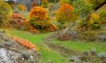 Златна есен край Рибново