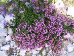 И билките са богатство в Родопите