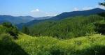 Кметове излязоха с позиция по повод промените в Закона за горите