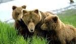 Малка е вероятността за нападения на мечки през тази пролет в Родопите