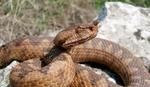 Змия ухапа моторист в движение